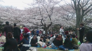 桜 大 。。