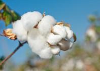 ニット素材の綿の様々な種類と特徴をまとめました